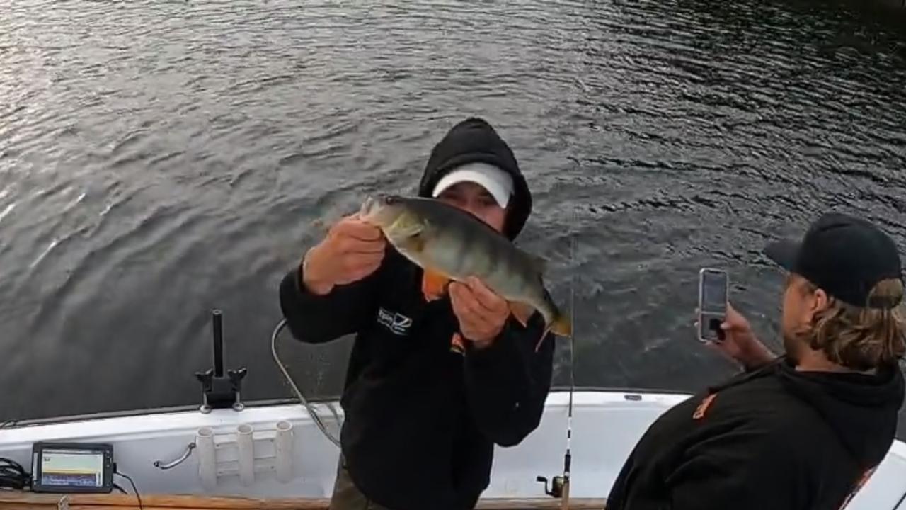 Fiske efter stor abborre ! on DVR 2021-08-06 19:08:54